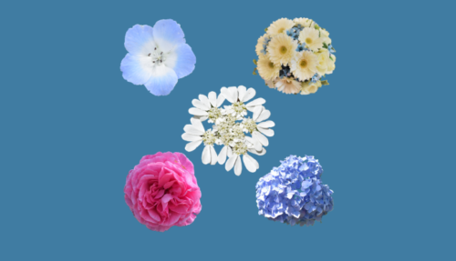 花の背景透過無料画像素材