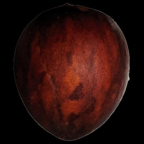 アボカドの種